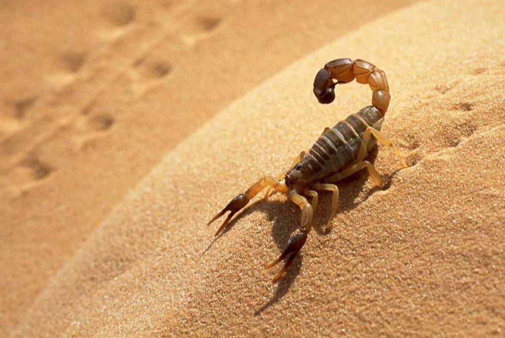 สัตว์ร้ายที่อยู่ในทะเลทรายมีอะไรบ้าง