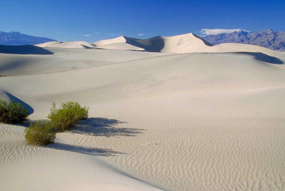 ทะเลทรายโกบี แหล่งรวมฟอสซิล